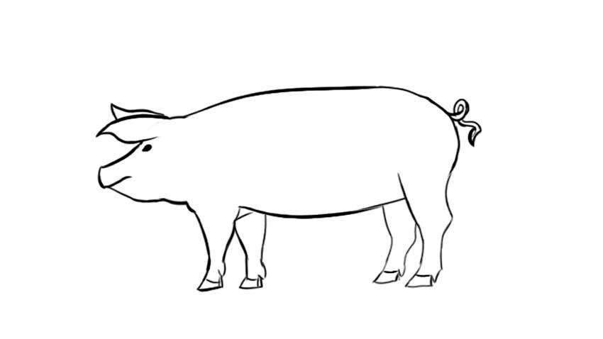 Simple pig drawing