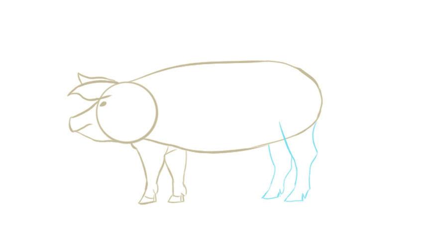 draw tutorial of the pig