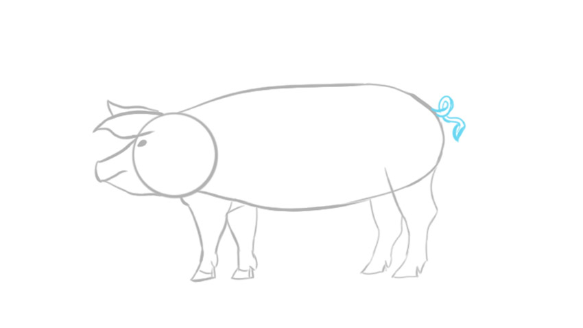 how to draw pig easy