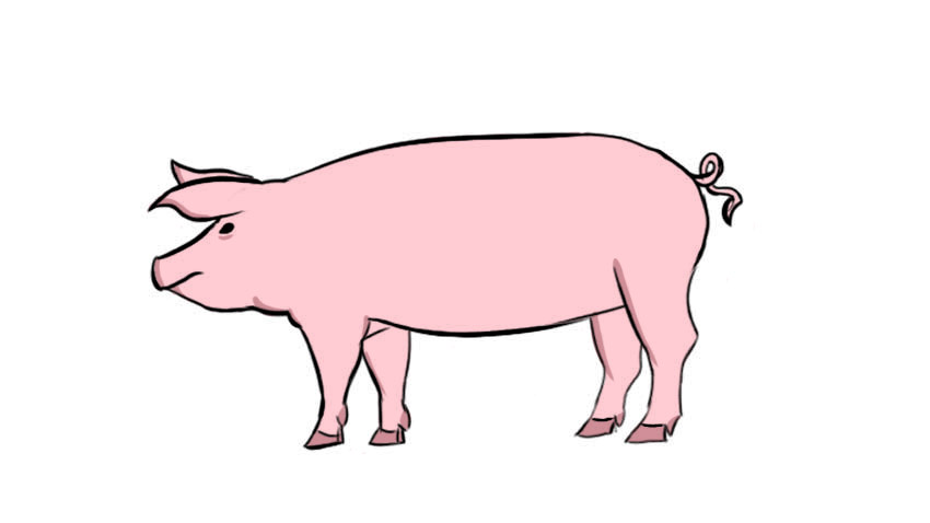 how to draw a pig pink