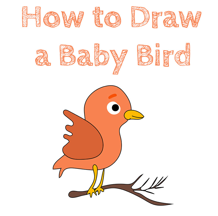 how-to-learn-draw-a-baby-bird