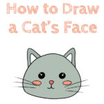 How to Draw a Cat's Face