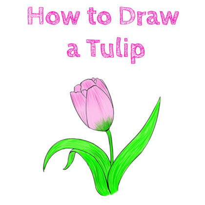 tulip how to draw