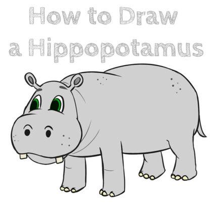 Cartoon Hippo How to Draw