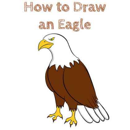 Eagle How to Draw Step by Step