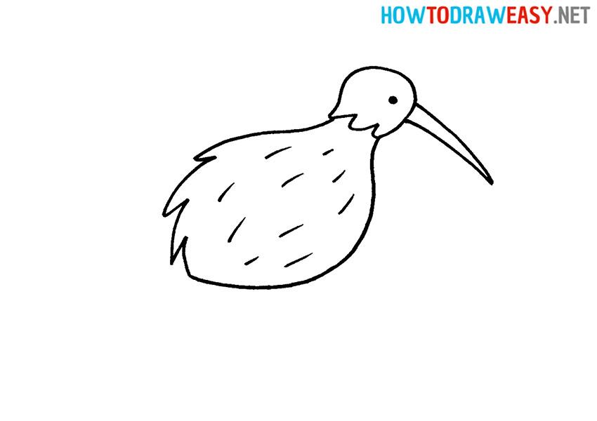 How to Draw a Cartoon Kiwi Bird