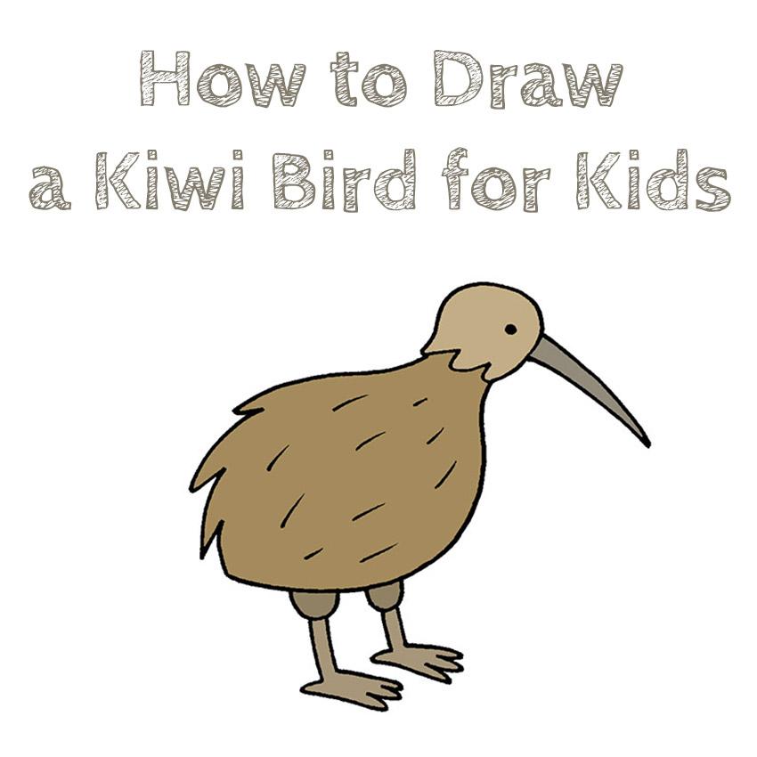 How to Draw a Kiwi Bird for Kids