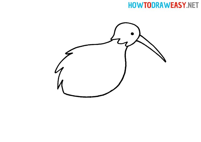 Kiwi Bird How to Draw